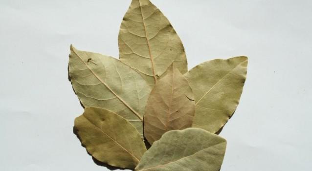 Τα δαφνόφυλλα ως εντομοαποθητικό
