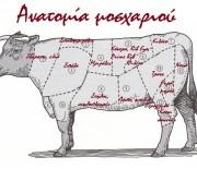 Ανατομία μοσχαριού για να ξέρετε τι κρέας θα ζητάτε