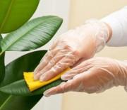 Πως να καθαρίσετε τα φύλλα από τα φυτά εσωτερικού χώρου