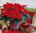 Πώς να φτιάξετε μόνοι σας Χριστουγεννιάτικες συνθέσεις